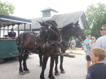 The two horses that took us on a carriage tour of the park