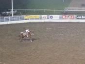A tiny girl riding a massive horse