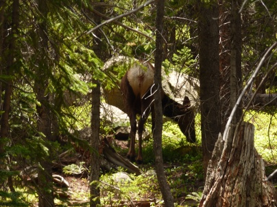 One of the deer we saw along the way while we were hiking