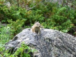 This little chipmunk was just posing for us!