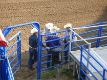 Riders awaiting their turn to ride a bull or horse