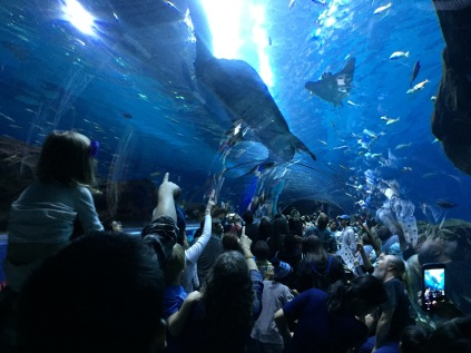 People getting excited as a whale shark passes over